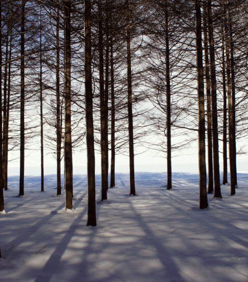Legend of White Woods ~白い森の伝説~