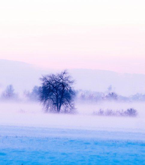 冬の夢 ~青と白~